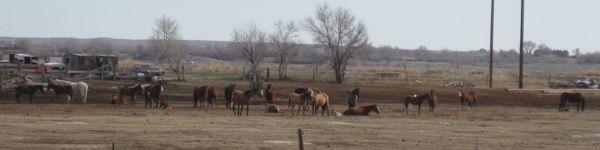 We passed horses ...