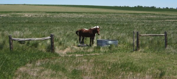 I was a few beats too late for the perfect shot of the two horses looking quizzically at us over their trough.