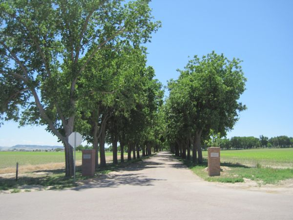 Mile 13: looking south down the tree-lined drive to the Gering cemetery