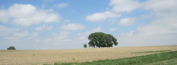 In shortgrass prairie country, a clump of tall trees can really attract the eye.