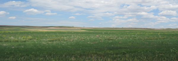 The dot at middle is one of the pronghorn, the dot towards the right is another one.
