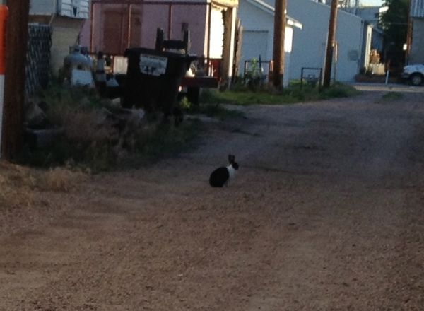 A loose domestic rabbit that I have seen several times in the vicinity of Ave B and 20th/19th Streets.
