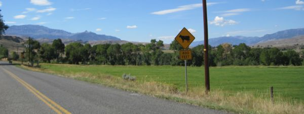 400 cattle feet ahead? OK, so, doing the math, that would make 100 head of cattle?