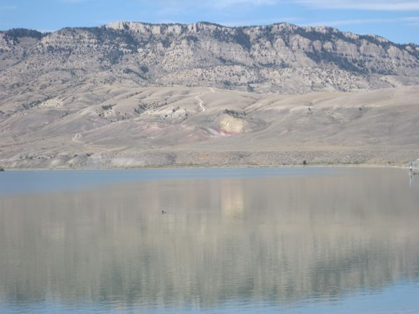 A cormorant on Buffalo Bill Reservoir.
