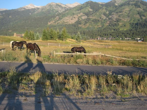 Our shadow overlapped a lovely bike path at the edge of a horse pasture set against the mountains.