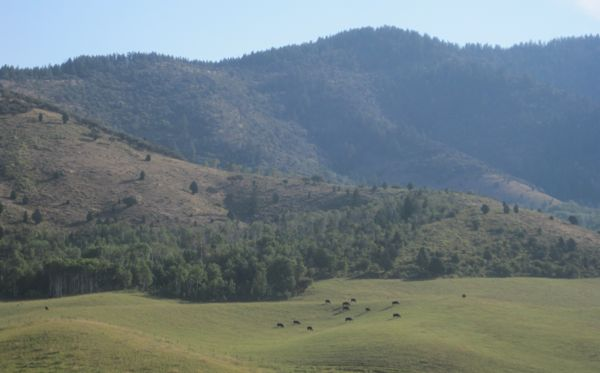 Those cattle are surely oblivious of what a beautiful place they graze in.