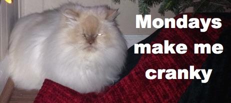 cranky yeti cat