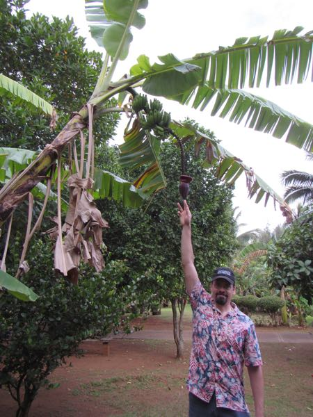Bugman pointing out a banana blossom at a botanical garden.