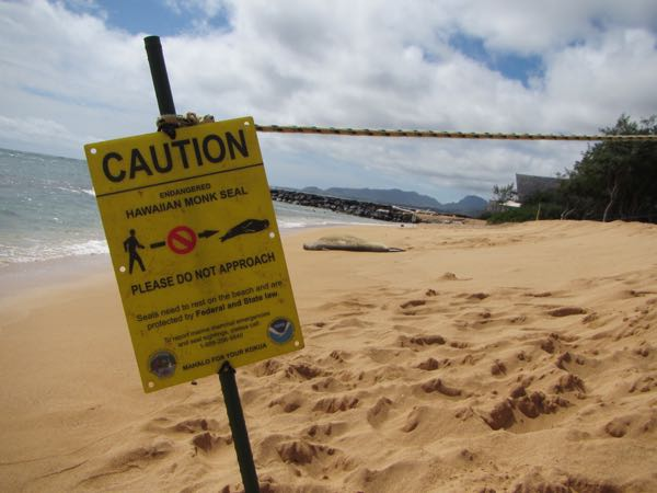 "The ""do not approach the seals"" signage. The two lumps on the beach in the distance are the seals."