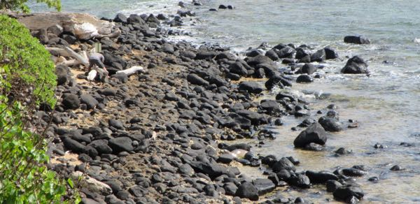 Can you see the seal? Hint: a wet seal is shinier than porous volcanic rock.