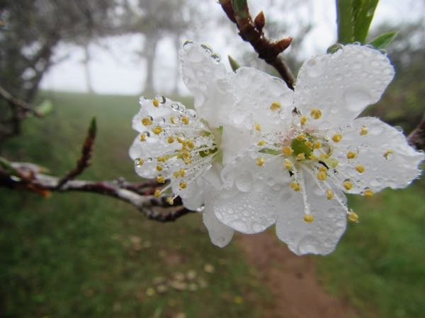 rain on blossoms