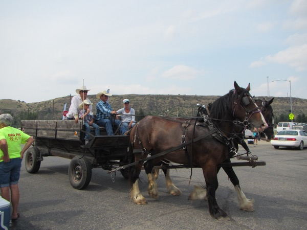 There were a couple of horse-drawn conveyances to take us into downtown Absarokee. These two hard-working creatures were named Rose and Beauty.