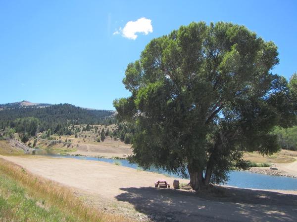 30 shade tree