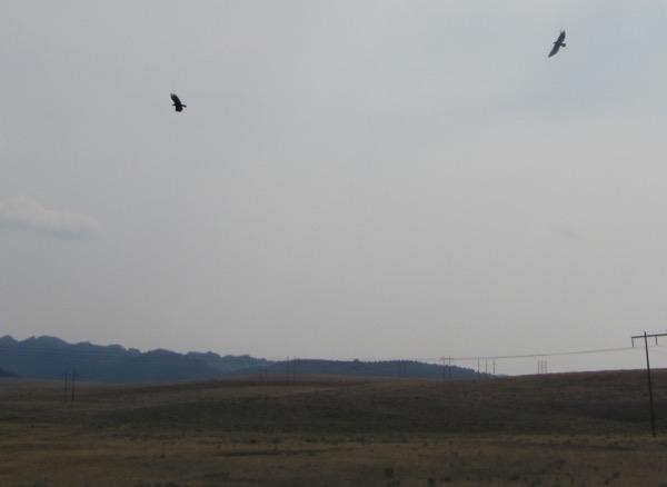 35 vultures