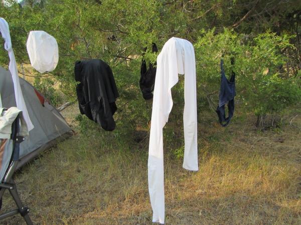 43 laundry tree