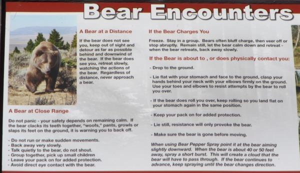 5 bear tips