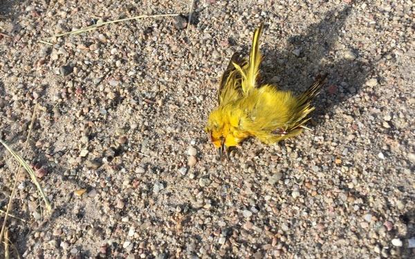 macabre roadside nature guide